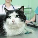 cat-loves-vet