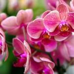 orchids-4468051__340