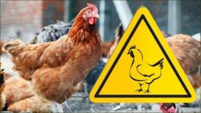 хвороби птиці [800x600]