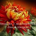 hrizantema2_Fotor [Старосамбірські вісті]