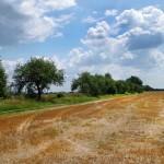 Замітка скошення трави